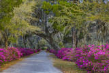 USA  Georgia  Savannah  Azaleas in Historic Bonaventure Cemetery