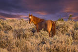 USA  Oregon  Harney County Wild Horse on Steens Mountain