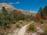 Usa Texas  Guadalupe Mountain  Mckittrick Canyon Hiking Trail