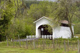 USA  Oregon  Philomath Harris Bridge Vineyard by the Covered Bridge