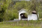 USA  Oregon  Philomath Harris Bridge Vineyard by the Covered Bridge
