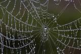 USA  Georgia  Savannah  Dew Drops on Spider a Web