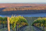 USA  Washington the Benches Vineyard in the Horse Heaven Hills Ava