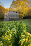Old Tobacco Farm Along the Natchez Trace  Tennessee  USA