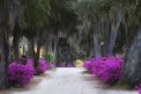 USA  Georgia  Savannah  Azaleas in Historic Bonaventure Cemetery