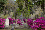 Azaleas and Headstones in Bonaventure Cemetery  Savannah  Georgia  USA