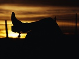 Cowboy's Boot and Spur Silhouetted at Sunrise
