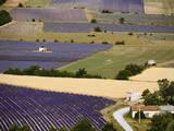 Aerial Lavender Field