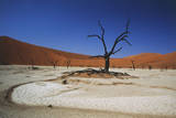 Namibia  Sossusvlei  Deadvlei  Dead Tree with Water Mark