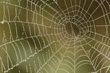 Florida  Dew Spider Web  Dina Darlina
