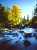 USA  California  Sierra Nevada  Autumn Colors Along a Stream