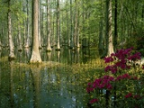 Cypress Gardens in South Carolina