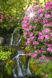 Spring Flowers in Crystal Springs Rhododendron Garden  Portland  Oregon