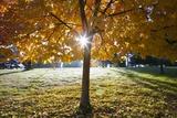 Sunshine Through a Fall Tree