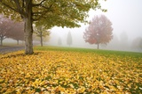 Misty Autumn Trees