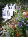 Wildflowers in Bloom by Waterfall