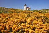 Wildflowers Add Beauty to Coquille River Lighthouse  Bandon Beach  Oregon Coast  Pacific Northwest