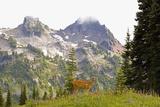 Deer and Pinnacle Peak