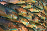 Parrotfish in Fish Market