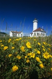 Wildflowers Blooming Near Lighthouse