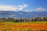Fall Colors Add Beauty to Hood River Valley and Mt Hood  Oregon  Pacific Northwest