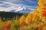Fall Colors Add Beauty to Mt Hood  Mt Hood National Forest  Oregon
