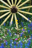 Wagon Wheel Sitting Among Wildflowers