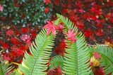 Fall Colors Add Beauty to Crystal Springs Rhododendron Test Garden  Portland  Oregon