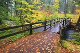 Fall Colors Add Beauty to South Trail at Silver Falls State Park  Oregon  USA