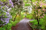 Spring Flowers in Crystal Springs Rhododendron Garden  Portland  Oregon  USA