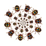 Beetle Circular Design with Small Round Beetles in the Chrysomelidae Family
