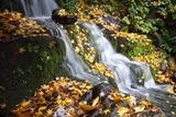 Fall Colors Along a Small Waterfall  Oregon