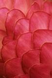 Ginger Petals