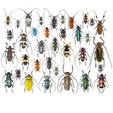 Long Horned Beetles in Design Layout and Size Relationship