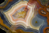 Condor Agate with Fortifcations Papier Photo par Darrell Gulin