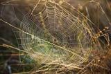Dew on Spider Web on Mt. Hood Papier Photo par Craig Tuttle