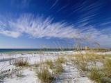 Sea Oats and White Sand Dunes