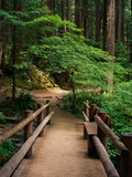 Wooden Bridge Along Sol Duc Falls Trail