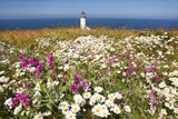 Wildflwers at North Head Lighthouse  Washington State  Pacific Ocean  Pacific Northwest