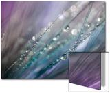 Dew 2 Acrylique par Ursula Abresch