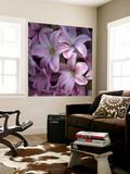 Pink Hyacynth Petals
