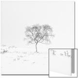 Winter Softness 1