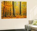 Orton Forêt Reproduction taille murale par Philippe Sainte-Laudy