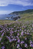 Oregon Coast and Douglas Iris