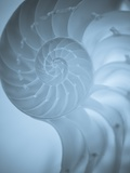 Shells 3