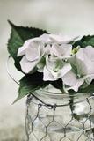 Fresh Hydrangeas I