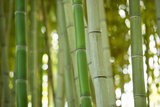 Bamboo and Bokeh I Papier Photo par Erin Berzel