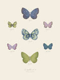 Collection de Papillons I