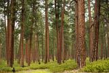 Willamette Nat'l Forest IV