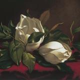 Magnolia Still Life I (detail)